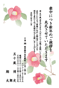 寒中カラー [菊]