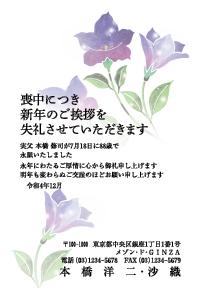 寒中カラー [胡蝶蘭]