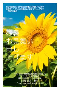 フォト残暑見舞いはがき向日葵